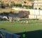 Il Gallico Catona passa in casa del Bocale ADMO, la semifinale di Coppa è più vicina